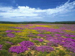 Dew_Flowers_Eastern_Cape_South_Africa_Wallpaper