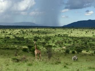 06-Massai_Mara_Kenya_1_Fotor.jpg