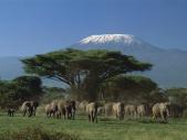 11-Elephants-and-Mount-Kilimanjaro-Amboseli-National-Park-Kenya_Fotor.jpg